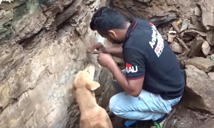 India, cani intrappolati sotto le macerie: il video della mamma che scava per salvarli