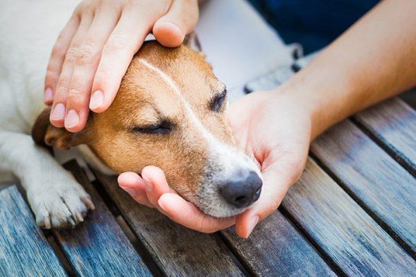 Cani e confini da stabilire: quali sono quelli necessari