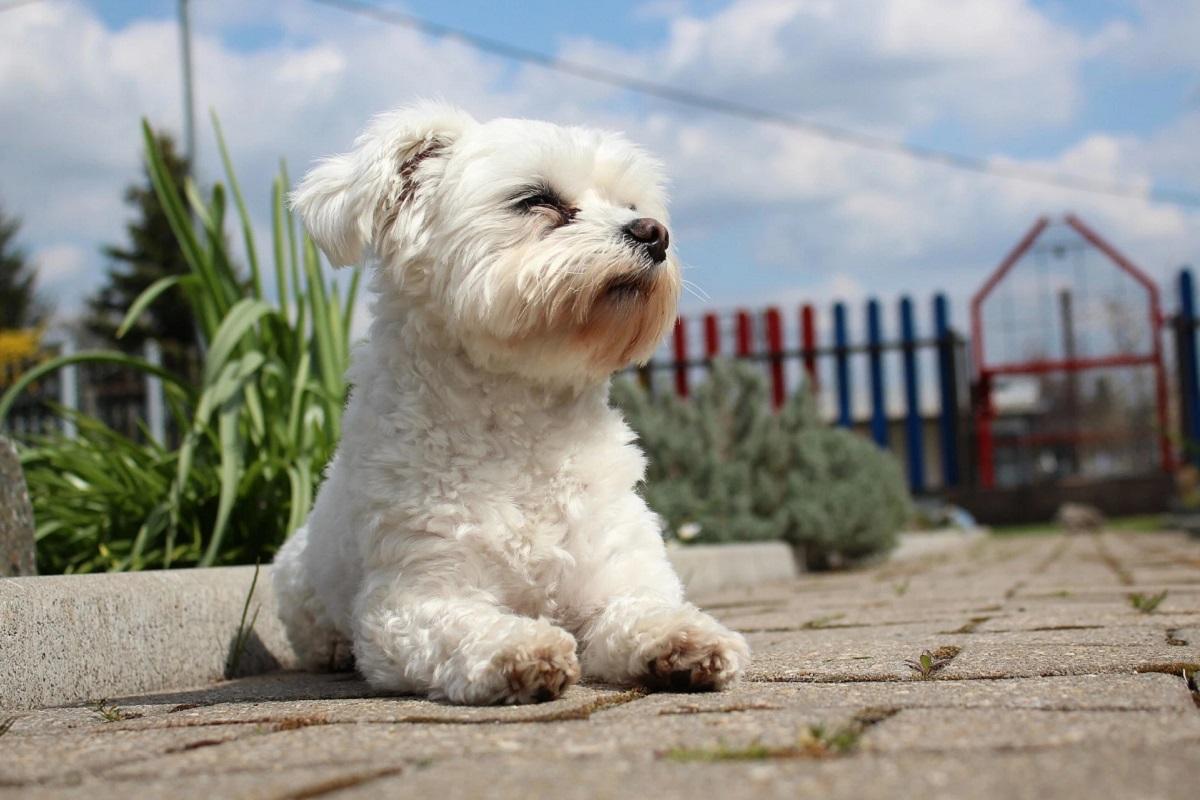cane si gode il sole