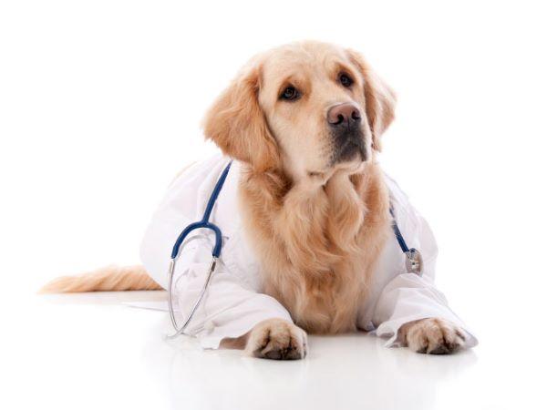 Spasmi muscolari involontari nel cane: cosa bisogna fare?