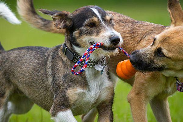 Gestione del carattere del cane vs addestramento: le differenze