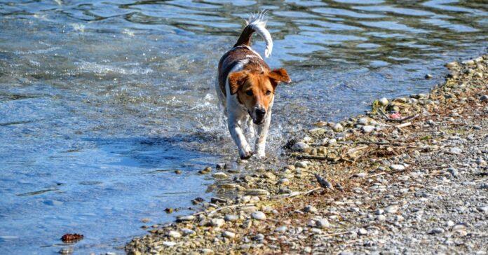 animali non sopportano l'acqua