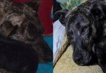 La storia del cane Jessica e del maialino Leonardo