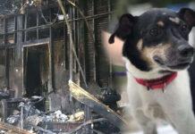 La storia del cane Zippy