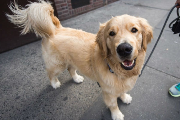 Masivet per cani, cos'è? A cosa serve e perché?