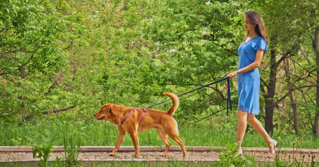 Domodossola: bisogni del cane non raccolti, scatta la multa