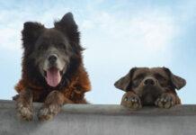 skateboard e cane