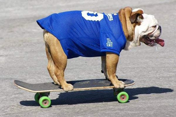 cane e skateboard