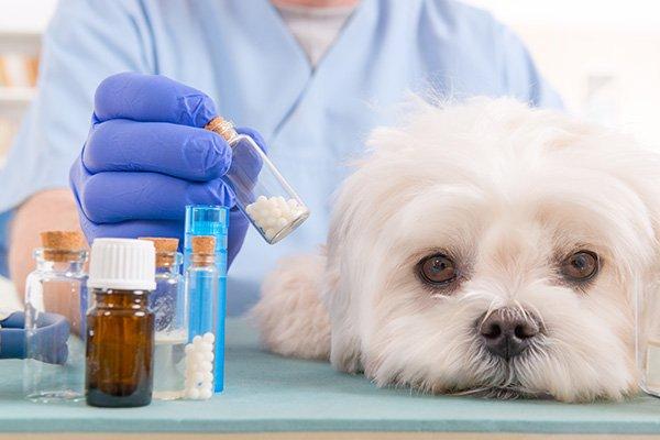 Perché le medicine dei cani costano tanto?