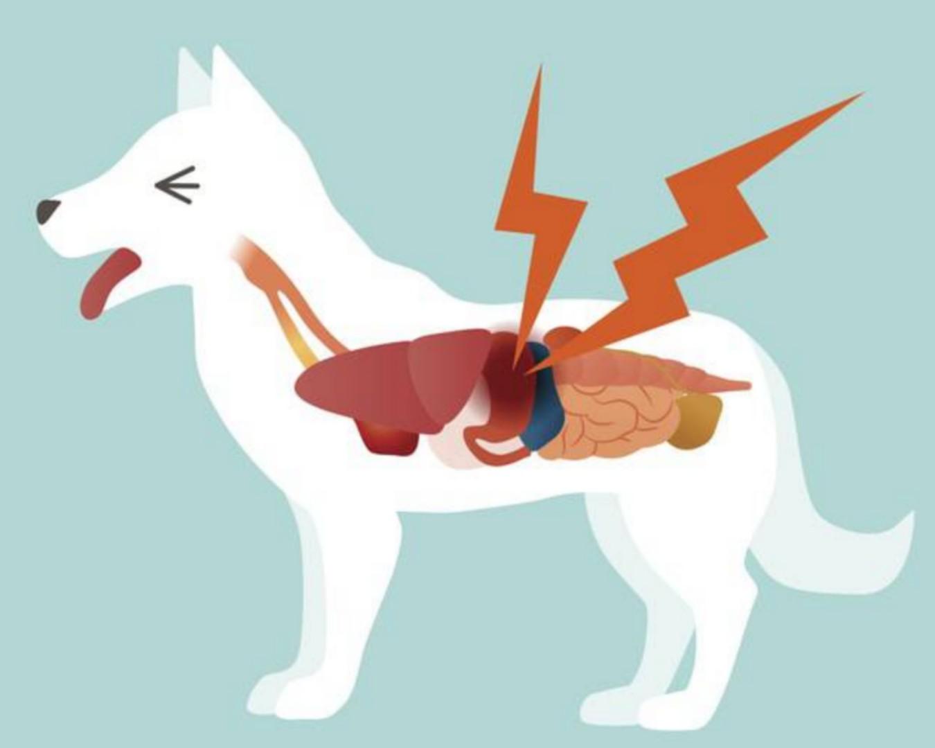 Problemi gastrointestinali del cane