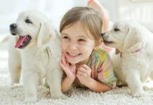 Requisiti per adottare un cane.