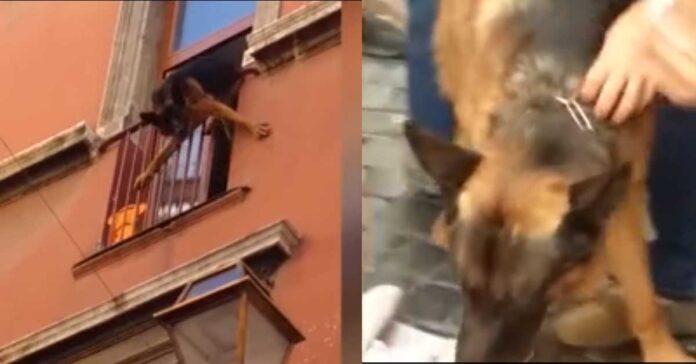 Roma, cane salvato