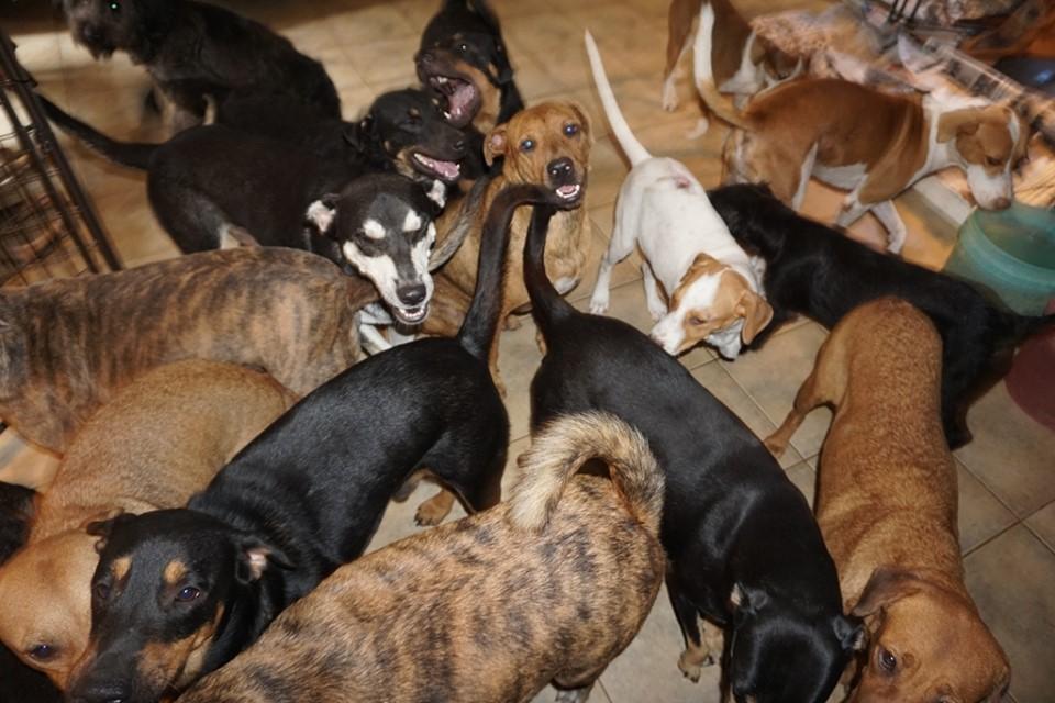 Tanti cani insieme