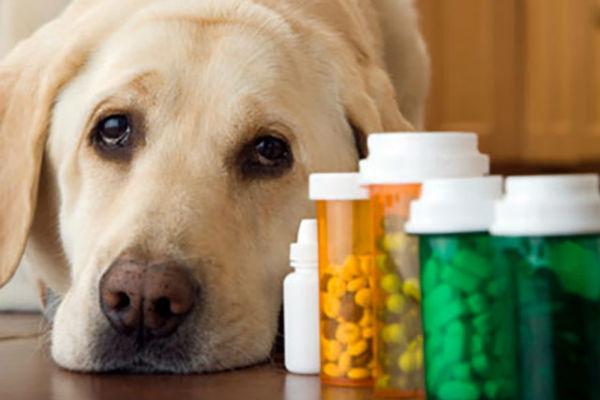 Trazodone per il cane: cosa sapere su questa medicina