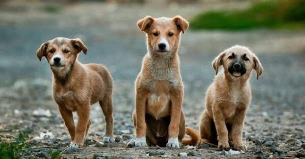 Foto di cani abbandonati sulle lattine di birra: la bella iniziativa