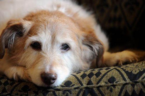 Accessori per cani anziani: quali sono?