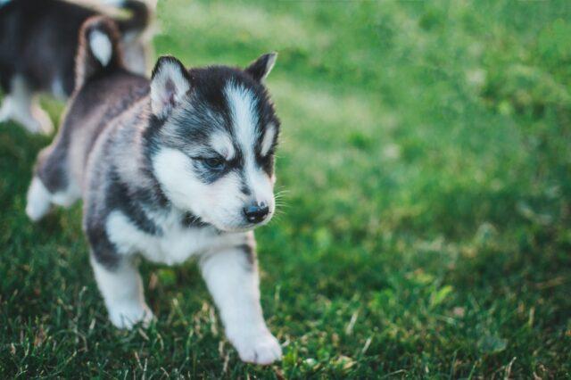 cucciolo di cane in campagna