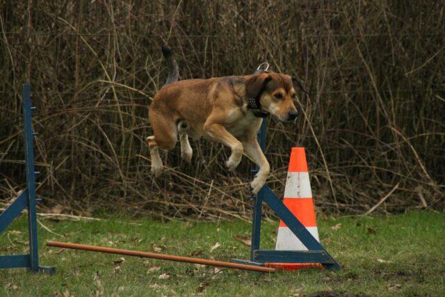cane che si allena