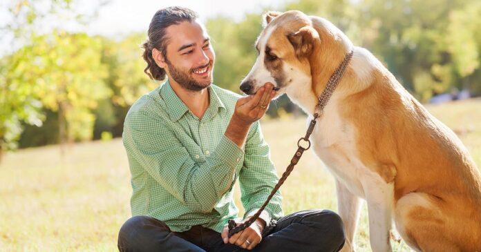 premiare il cane