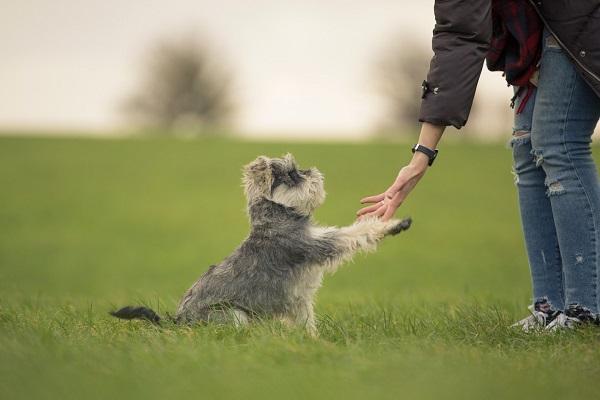 cane dà dà la zampa