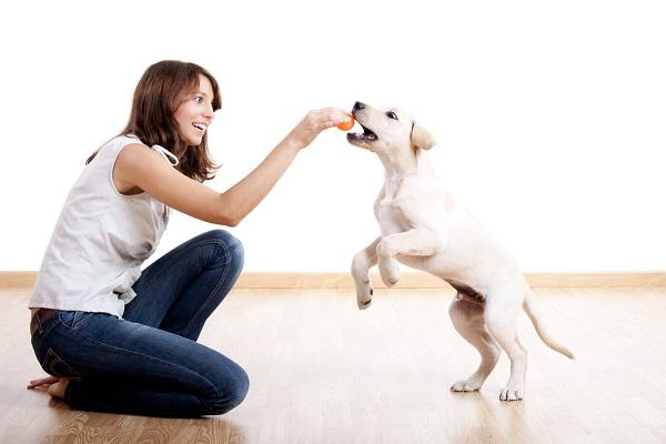 cucciolo di cane gioca con pallina