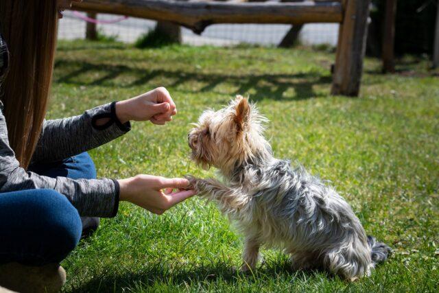 donna ricompensa cane