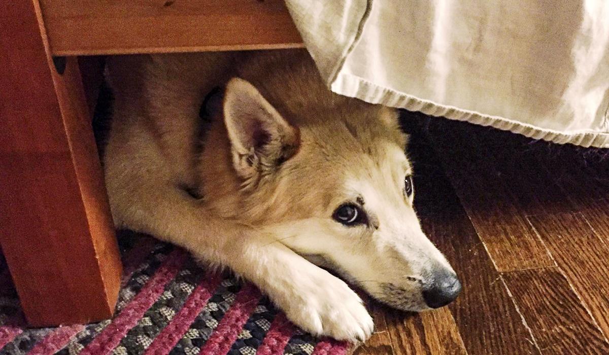 6 ragioni per cui ai cani piace stare sotto il letto (e quando è un problema)