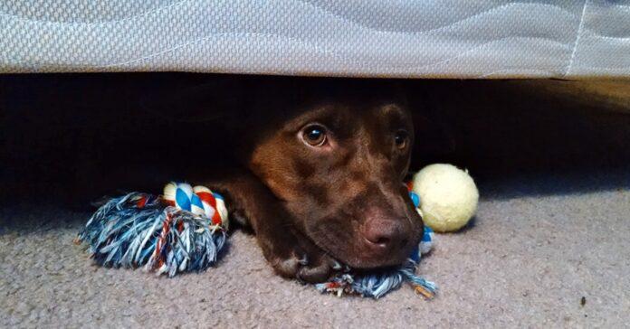 cane si nasconde sotto il letto