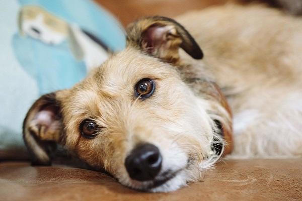 Alcalosi metabolica nel cane: cos'è? Che cosa bisogna sapere?