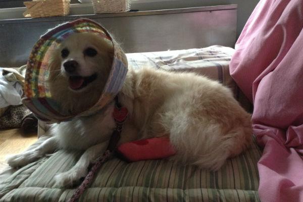 Cani feriti? Ecco le alternative al collare elisabettiano