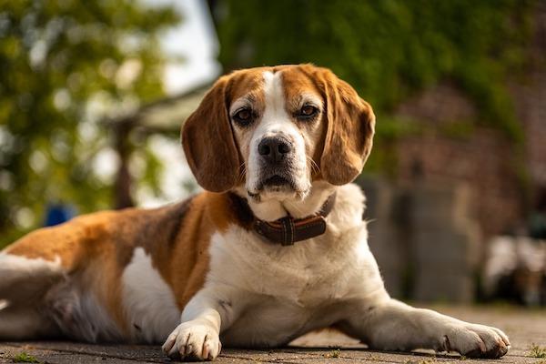Come insegnare al cane a salutare