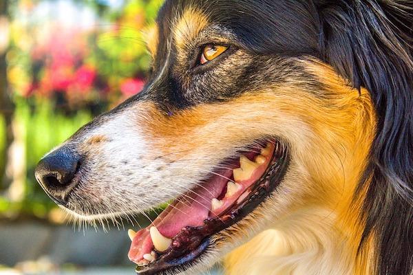La bocca del cane