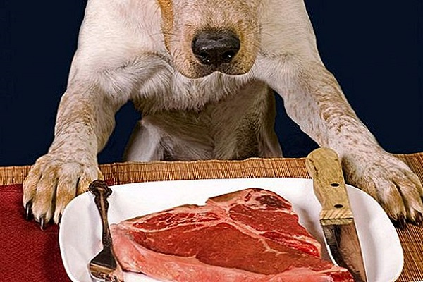 cane davanti a bistecca