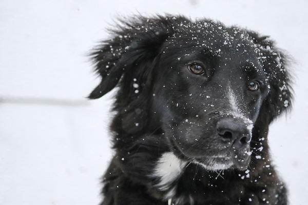 la neve è curiosa