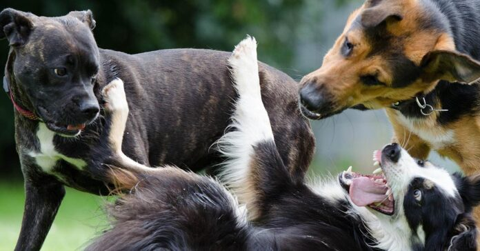 Cane di segno Ariete: caratteristiche, temperamento