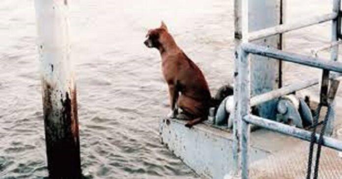cane-abbandonato-aspetta-sul-molo-il-ritorno-del-proprietario