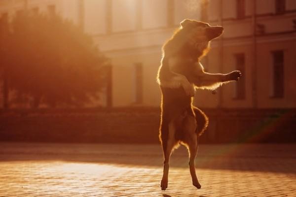 Il cane balla con la musica davvero?