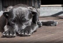 cani capiscono se subiscono un torto