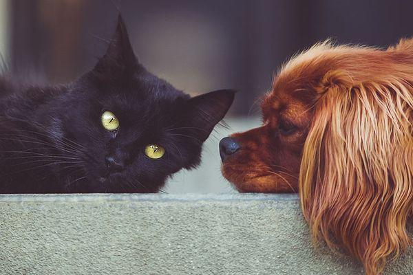 Cane e gattino: come farli andare d'accordo senza pericoli