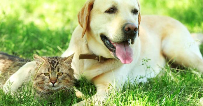 gattino insieme al cane