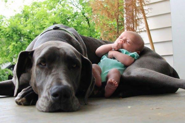 cane protegge bambini