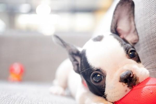 Il cane ha mangiato i trucchi: cosa succede adesso?