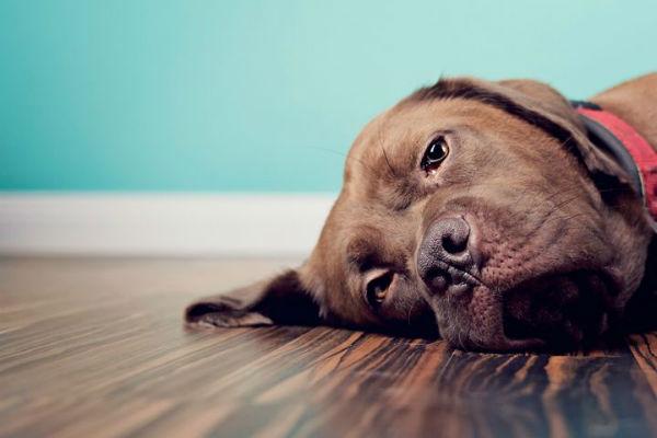 astrocitoma nel cane