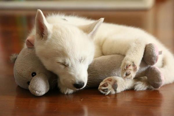 Narcolessia del cane: cos'è e come aiutare Fido