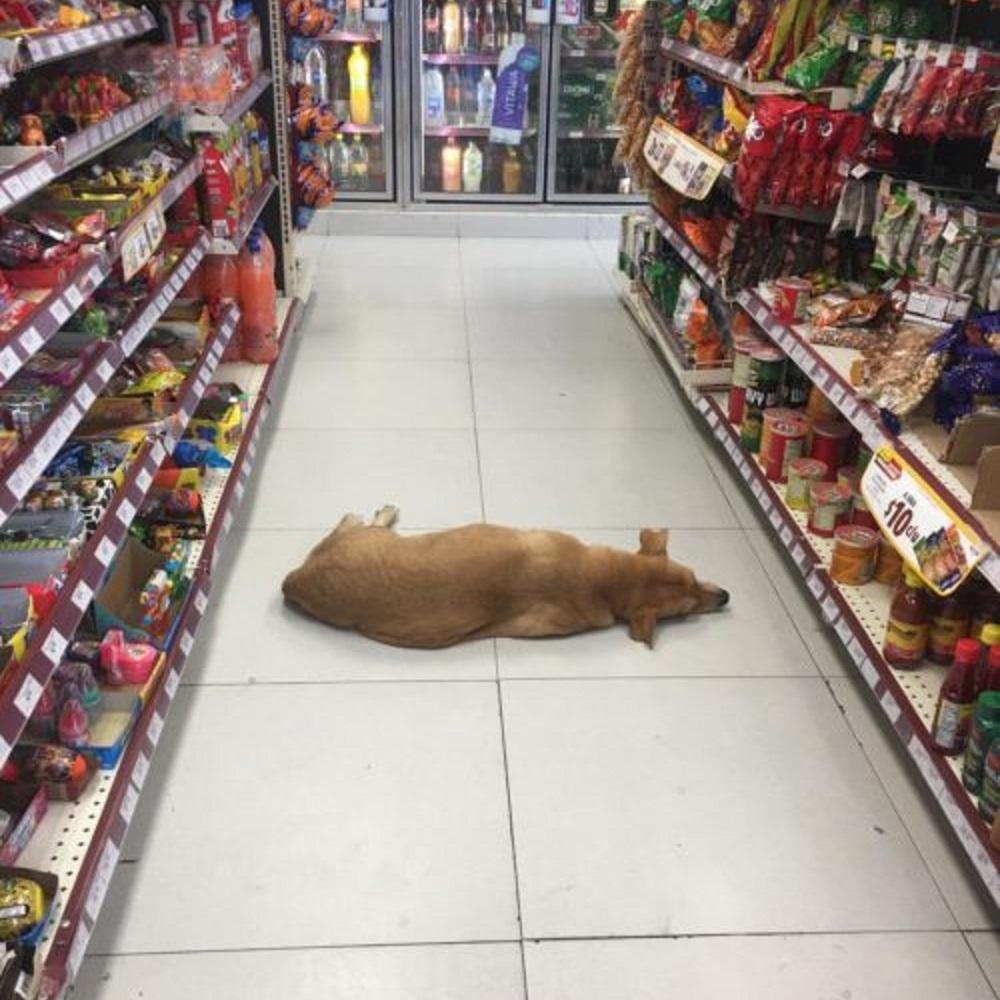 cane-negozio-messico