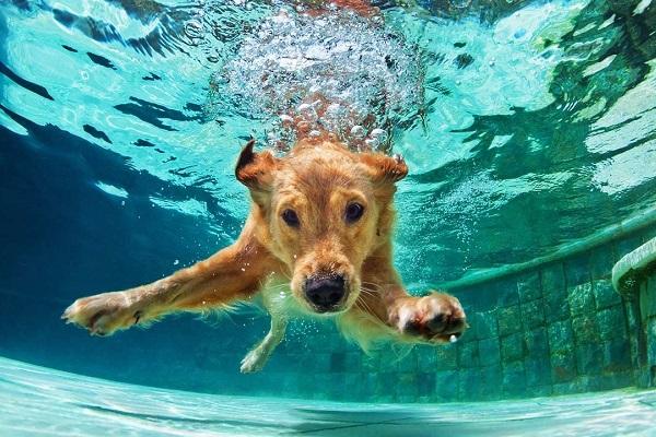 Cane odia l'acqua, tutto quello che bisogna fare