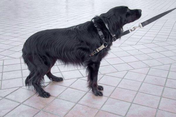 i cani possono provare risentimento
