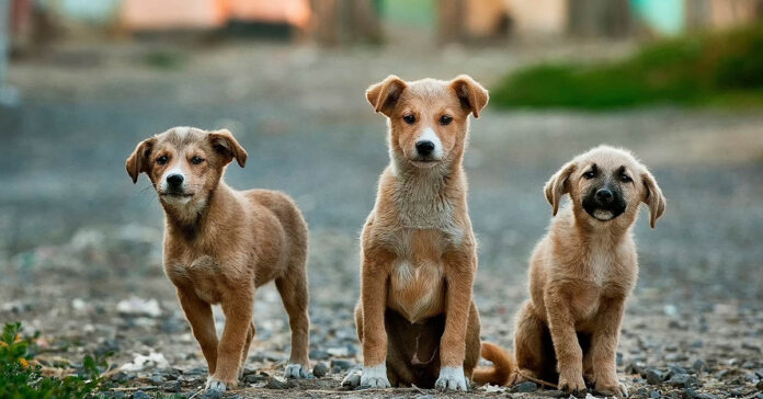 Razza e temperamento del cane: perché a volte non coincidono?