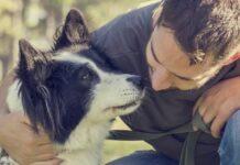 Il cane riconosce i volti umani?