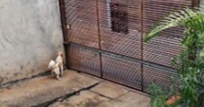 cane-riesce-a-fuggire-da-una-minuscola-fessura-di-un-cancello